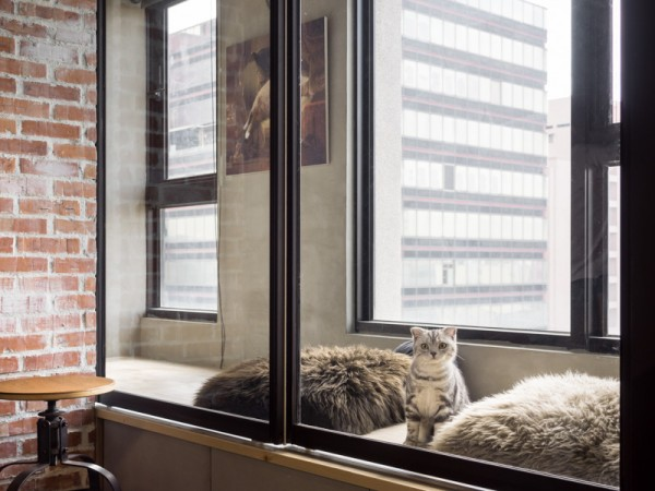 Cat Friendly Interior Design (15)