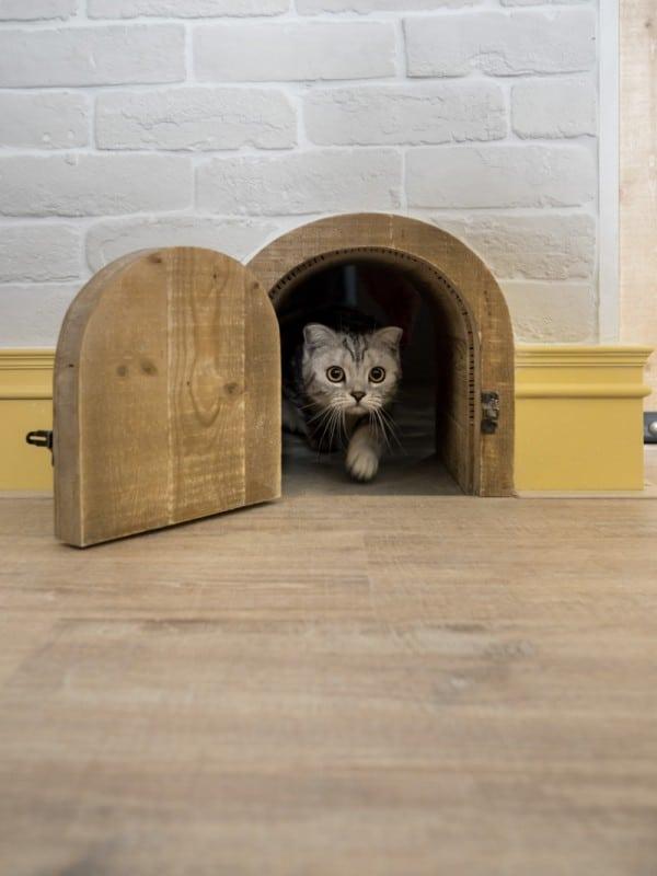 Cat Friendly Interior Design (25)