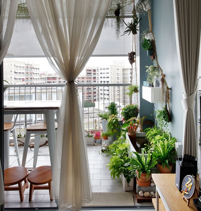 What Plants Should You Have In Your House: Best Indoor Plants